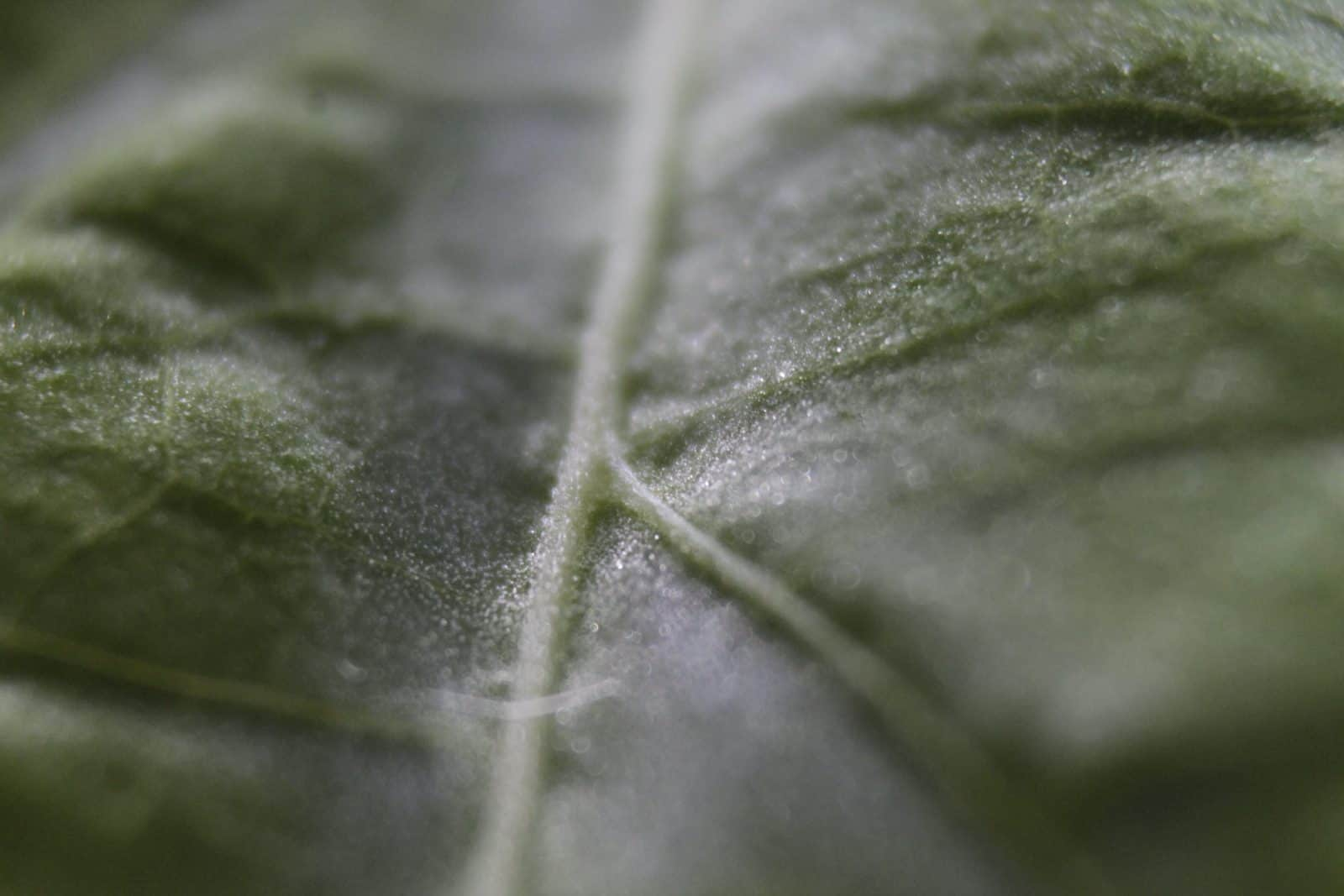 Healthy plant leaves thanks to AGGRAND plant fertility products