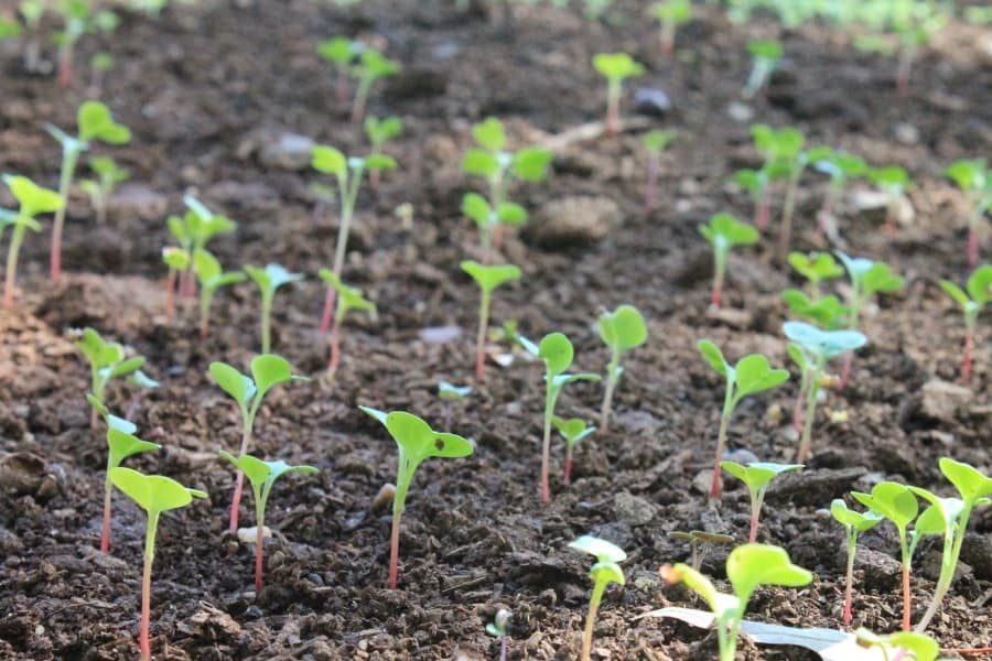 Buy Natural Fertilizer Product Neptune's Harvest 4-2-1 Online on Amazon