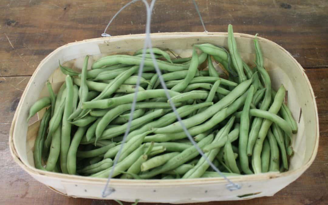 A Basket of Organic Green Beans.