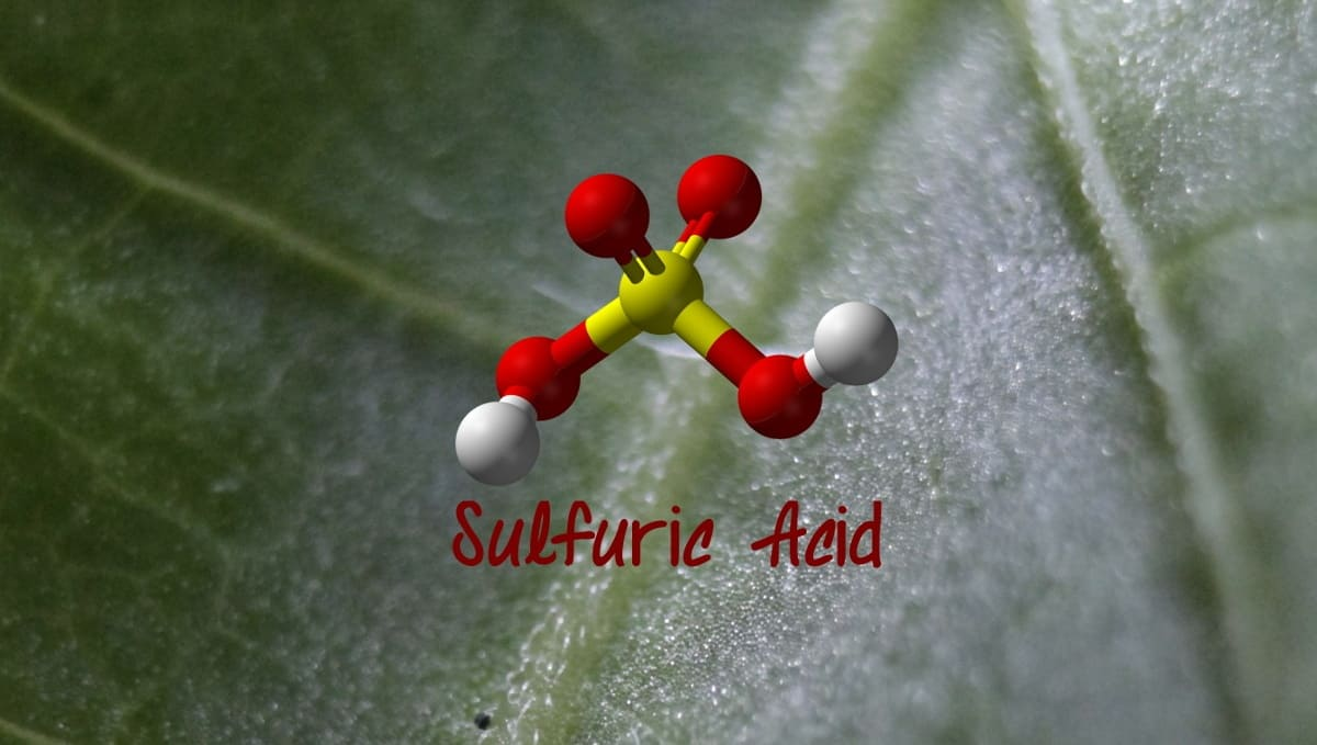 Buy Sulphur Dust Fungicide Powder for Blueberry Plant