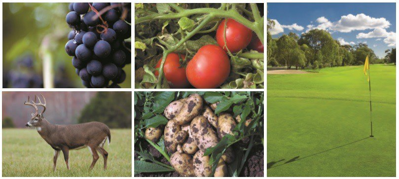 AGGRAND: Low Cost Alternative for Lawns, gardens, and golf courses