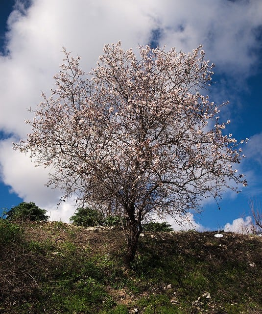 Where to Buy Natural Fertilizer for Almond Tree, Online on Amazon