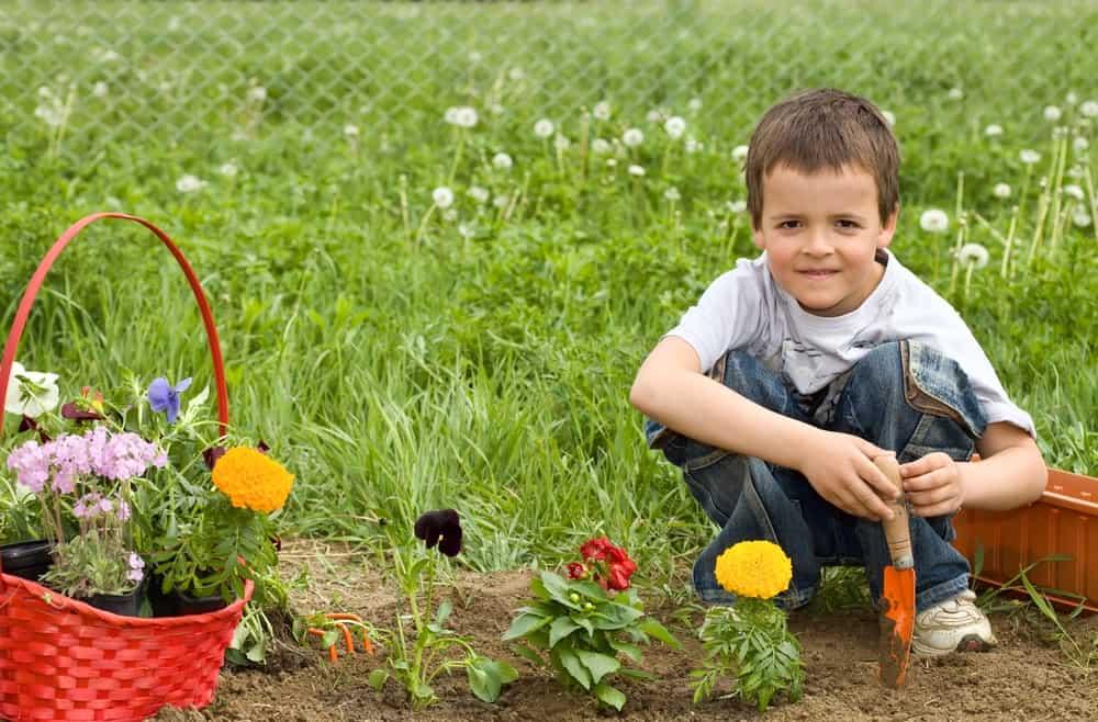 Gardening 101 for Newbies