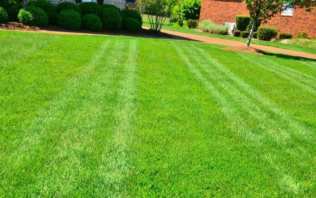 How to Change Soil pH for Lawn Grass