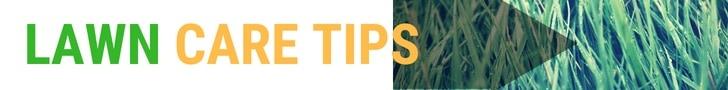 lawncare tips on Amazon