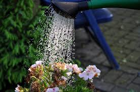 watering wands for garden plant care