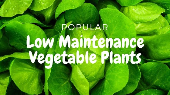 which vegetable plants can be grown from home with minimum effort?