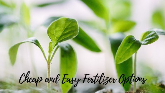 Homemade Fertilizers for Houseplants and Gardens - 15 Simple and Inexpensive Options