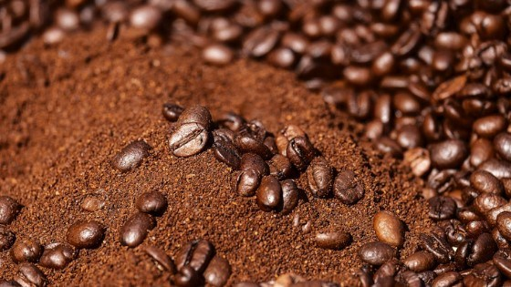 used coffee grounds as affordable fertilizer