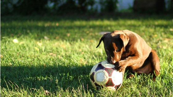 keep pets off lawn before party