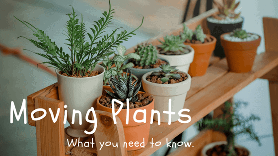 Moving With House Plants: What Can and Can't Cross State Lines