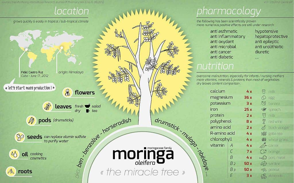 information on moringa