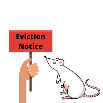 eviction notice for mice