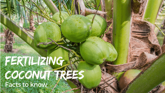 What's the best coconut tree fertilizer system recommendation?