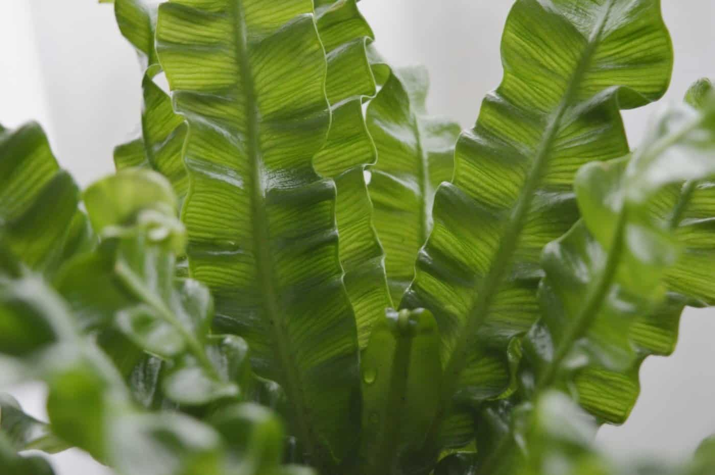 closeup image of fern