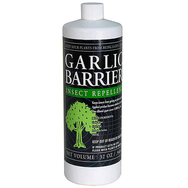 garlic barrier product ad