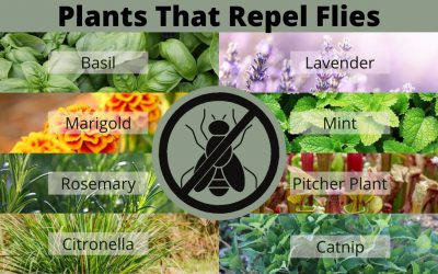 9 Plants that Repel Flies and Other Annoying Insects