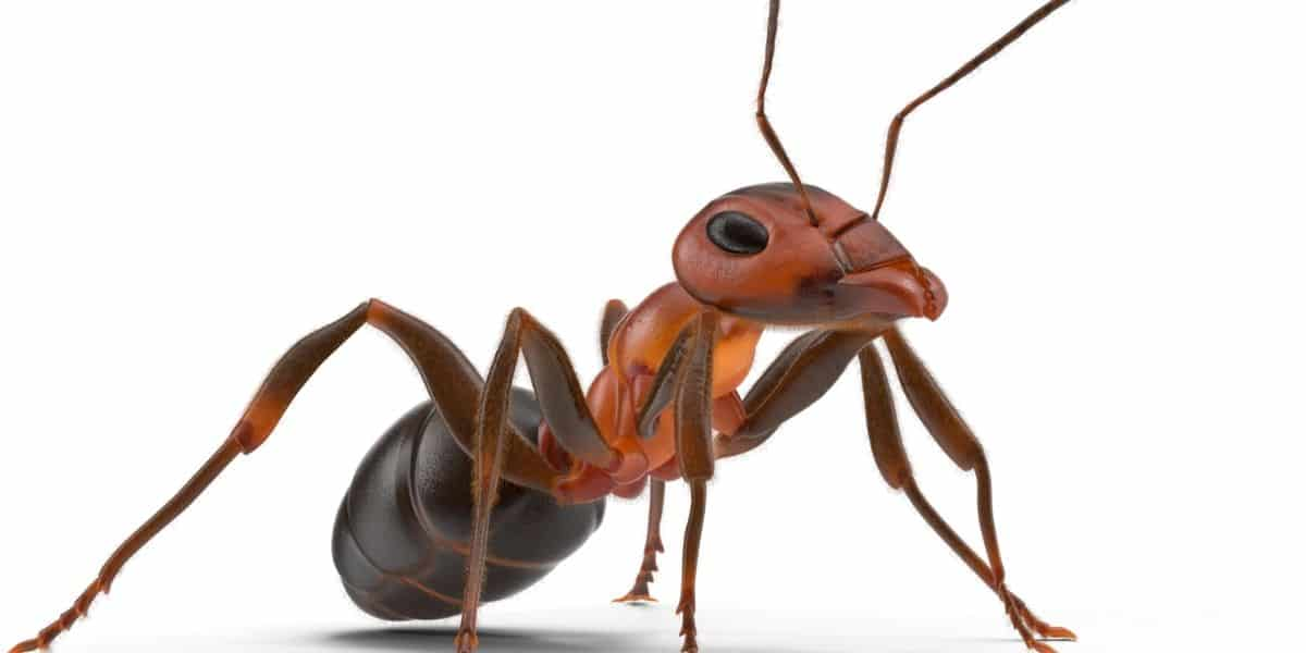 Plants that Repel Ants
