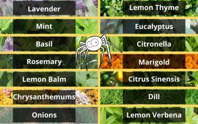 Plants That Repel Spiders From Your Home or Garden