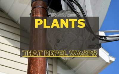 Plants That Repel Wasps and Bees