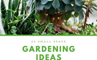 20 Small Space Gardening Ideas for Genius Gardeners