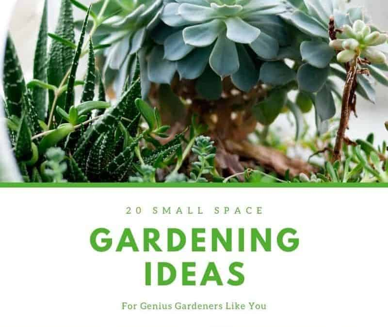 20 small space genius gardening ideas