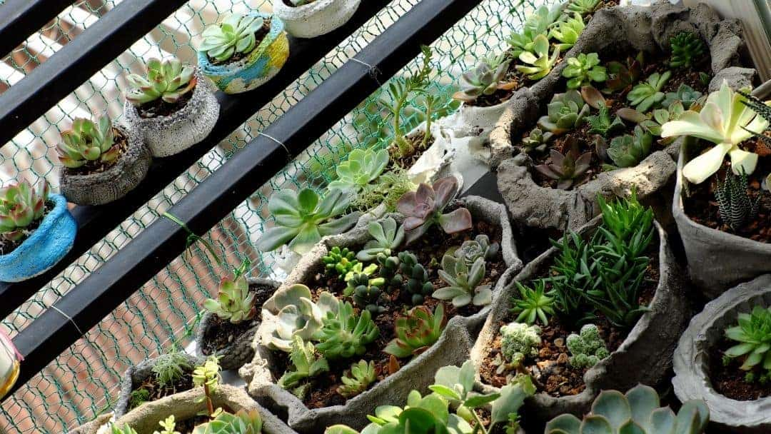 A balcony succulent garden made with small containers.