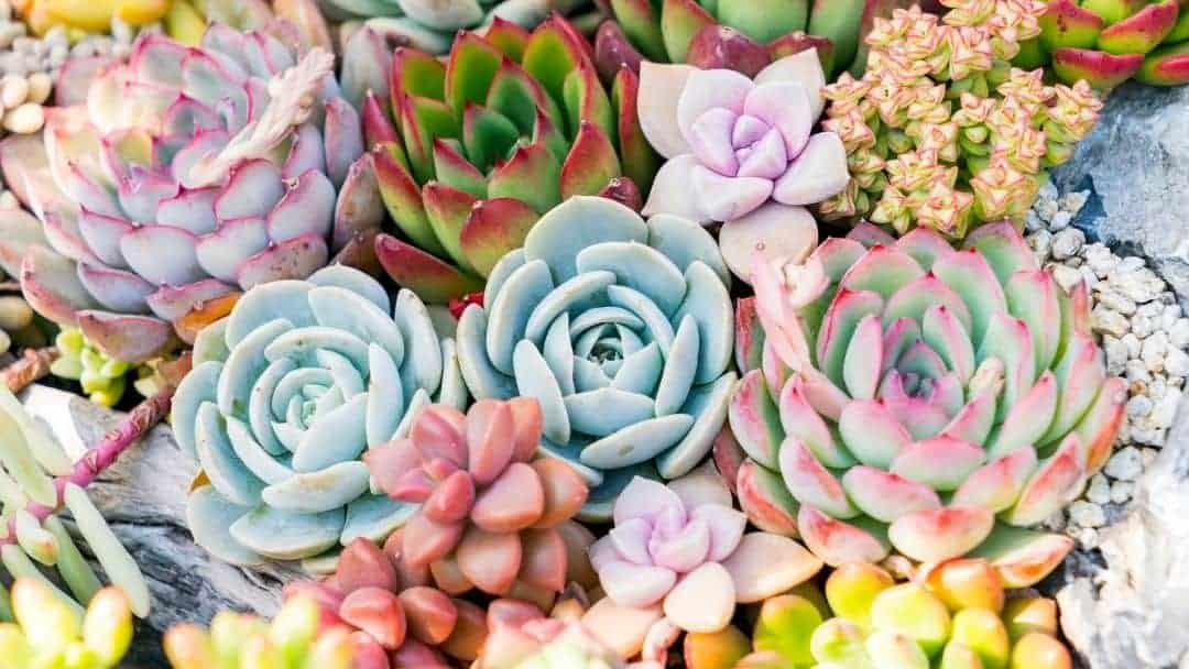 Succulent Balcony Ideas for Your Apartment Garden