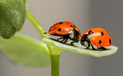 5 Good Bugs Around Your House You Should Avoid Killing