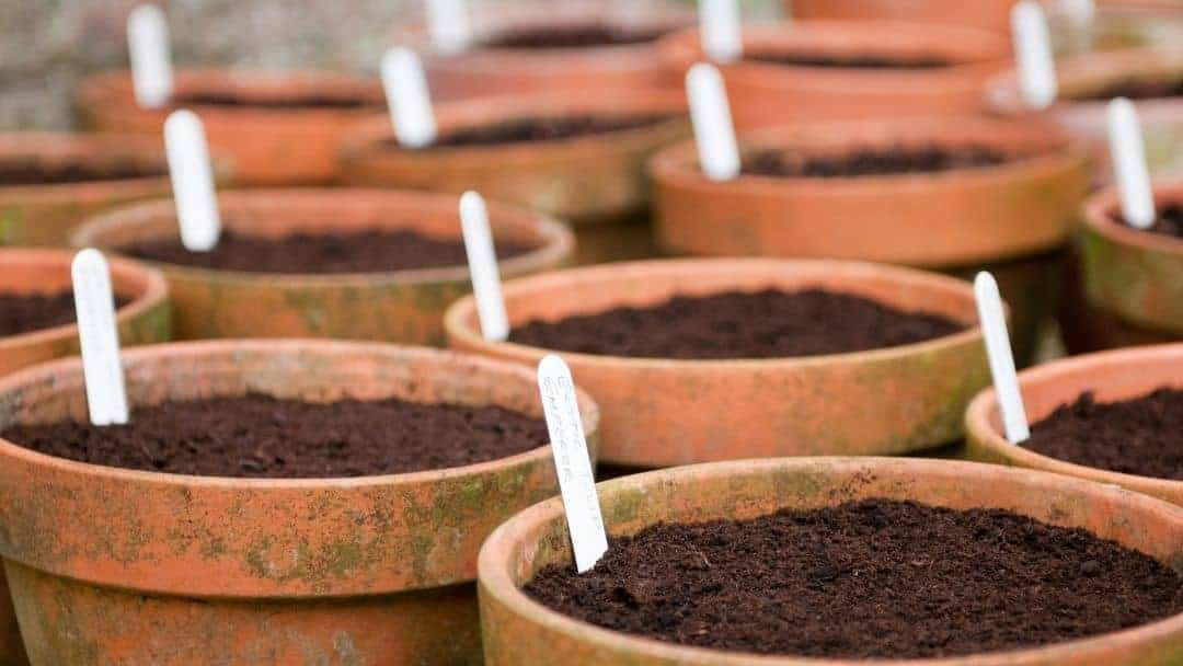 Flower pots for growing succulent and cacti.
