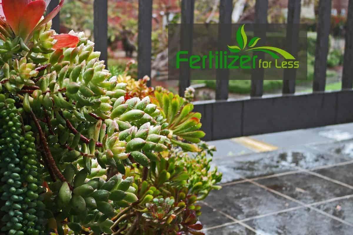 A succulent garden on a balcony