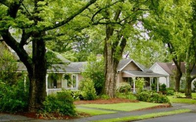 What Can I Do If a Neighbor's Tree is Damaging My Property?