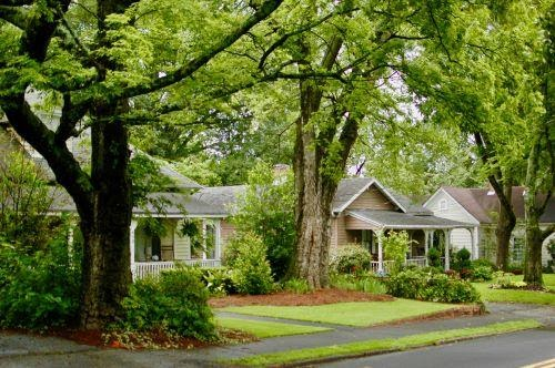 A front yard with lots of trees