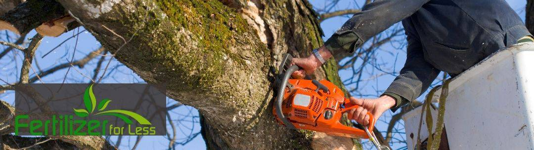 Tree trimming with a chainsaw.