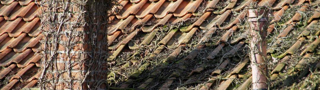 vines on a roof